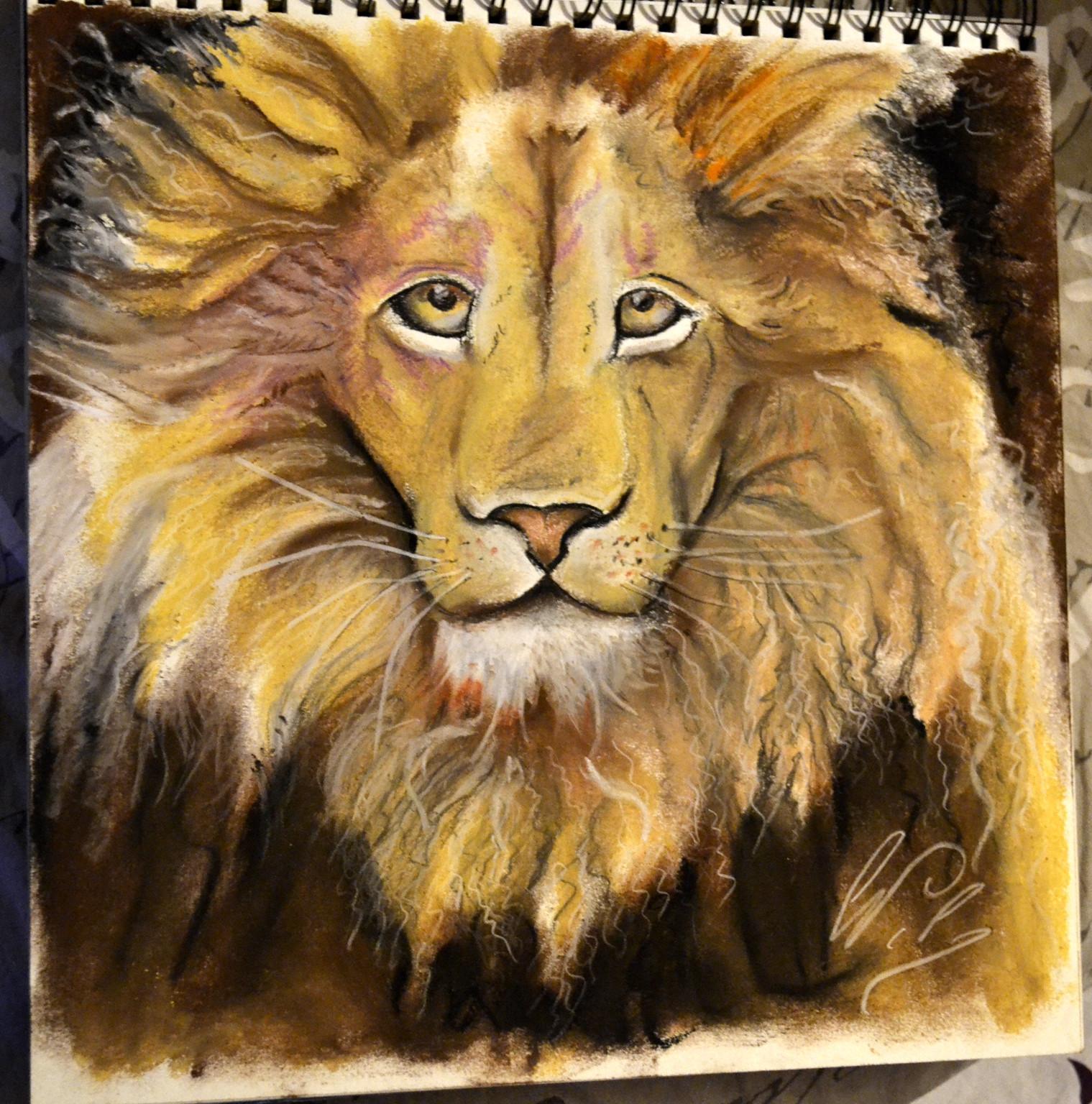lion au regard particulier