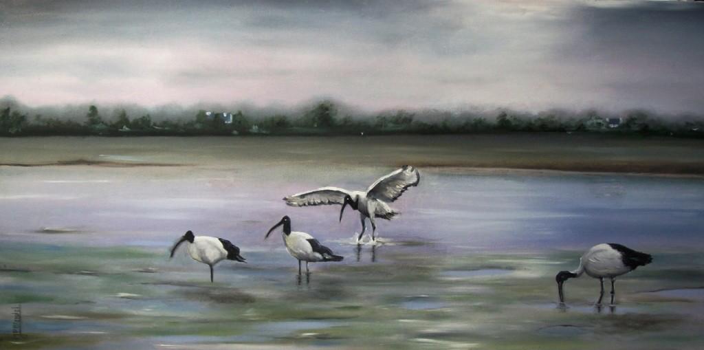 Golfe du Morbihan - Ibis sacré d'Egypte