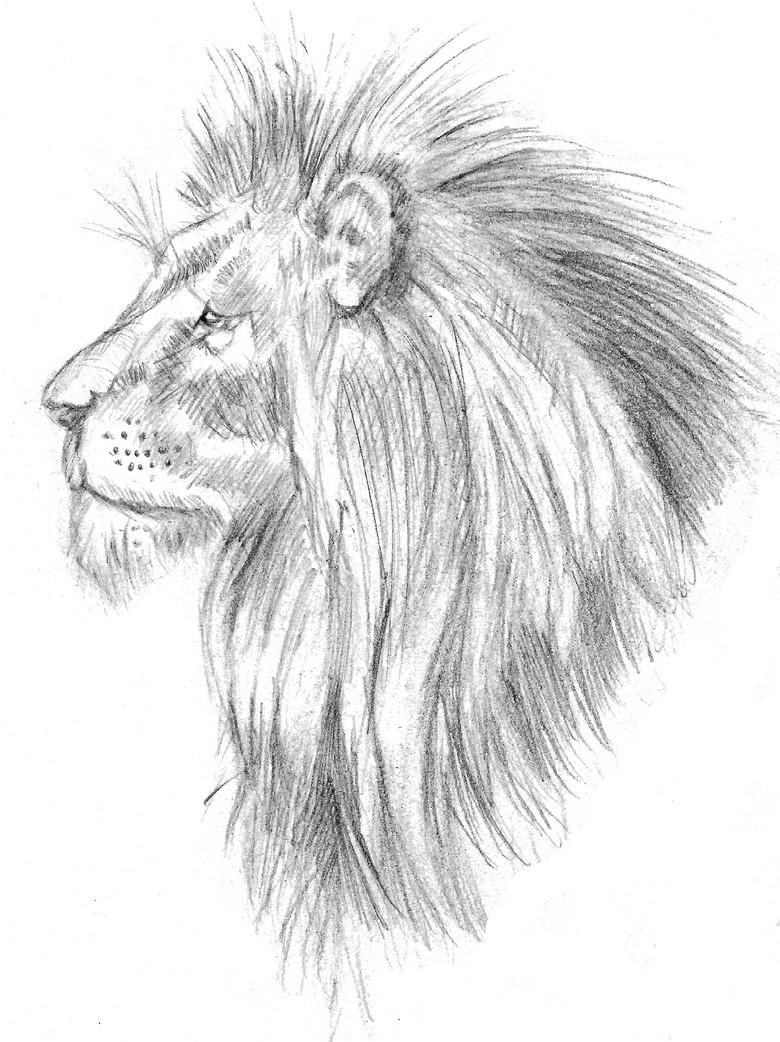 Dessin Lion Tête