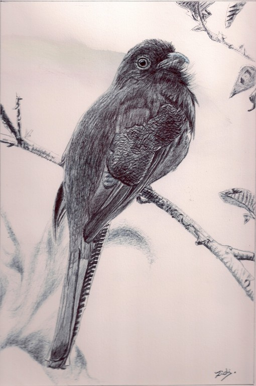 oiseau 2