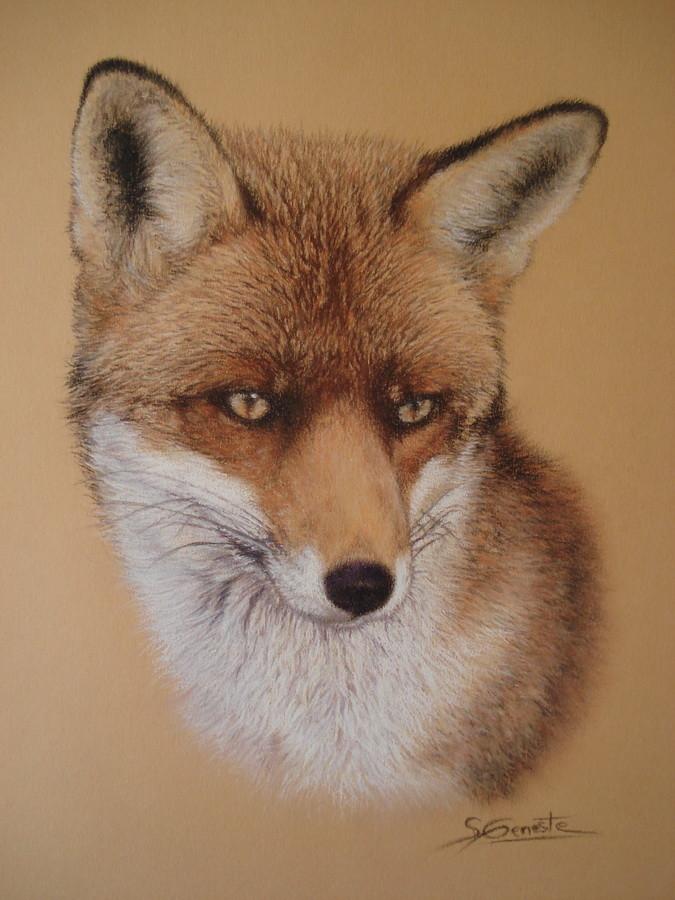 Dessin renard roux - Coloriage renard ...