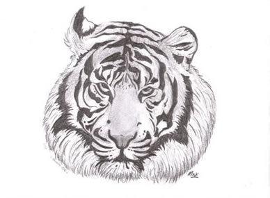 Tigre dessin - Image dessin tigre ...