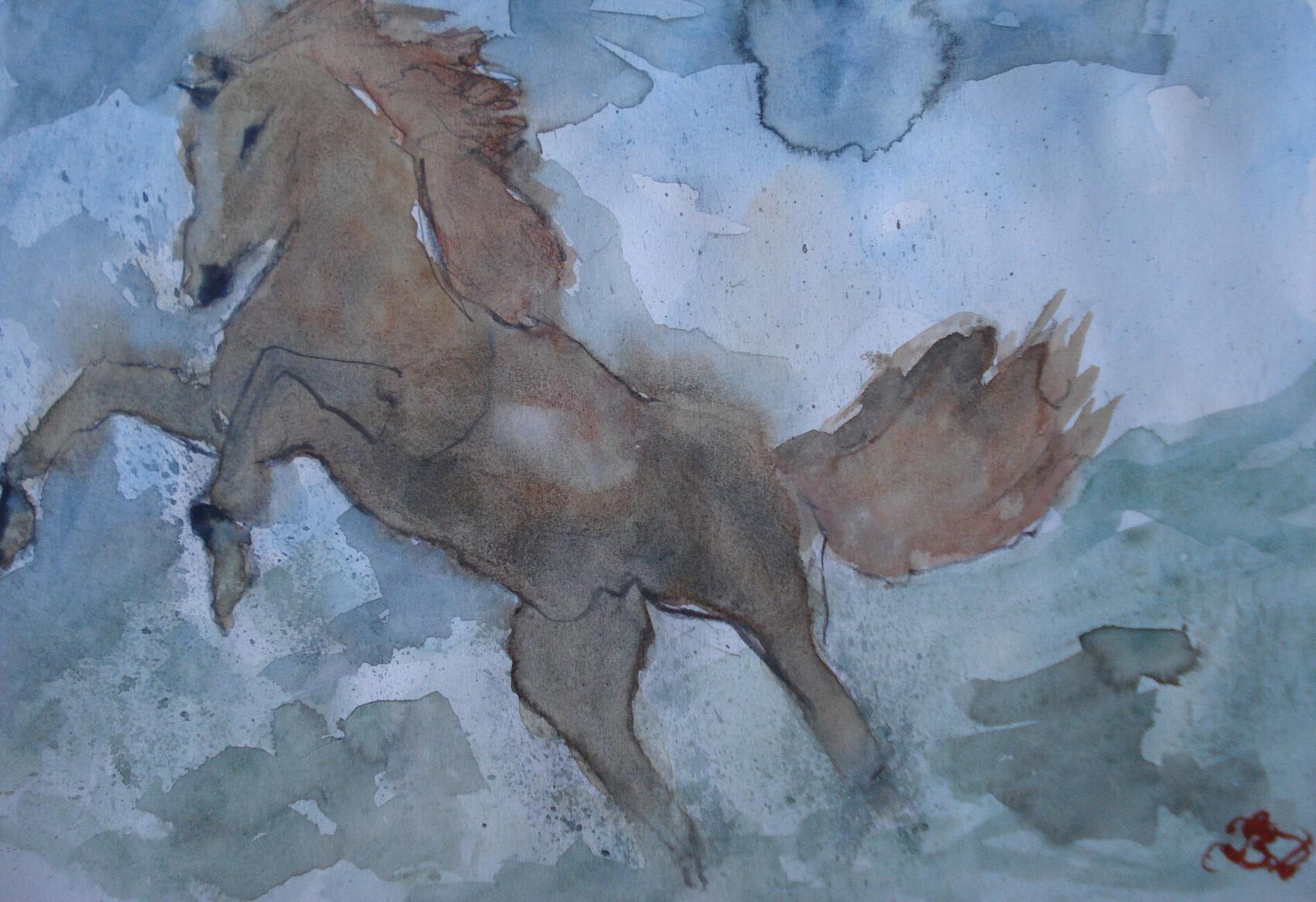 cheval en liberté