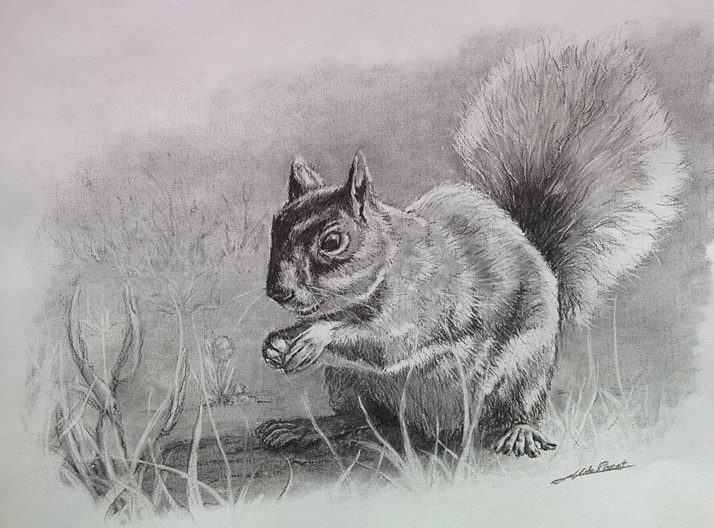 Coudoeil l'ecureuil