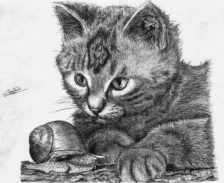Dessin chat et escargot - Photo de chat en dessin ...