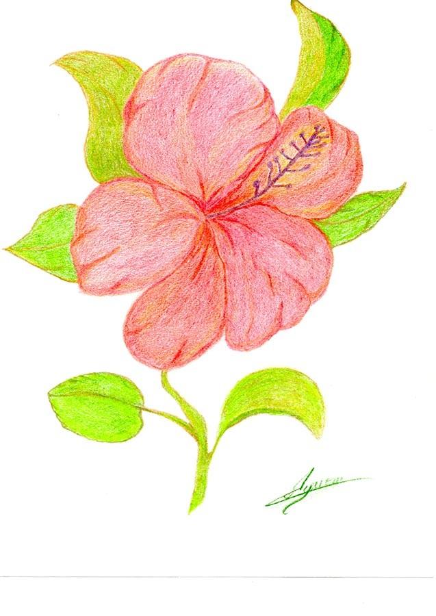 Dessin dessin fleur de passion - Fleurs en dessin ...