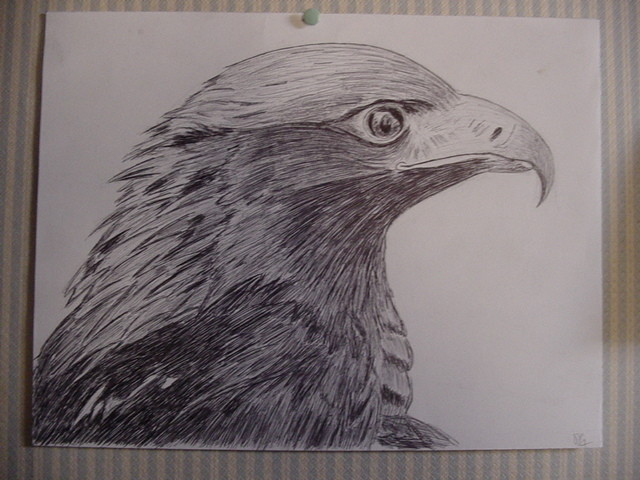 Dessin aigle de profil - Dessin de aigle ...