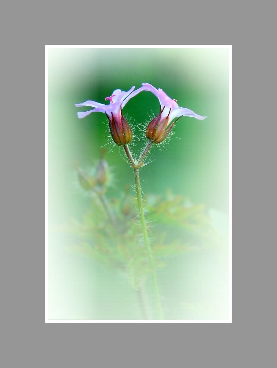 Fleurs sauvages.