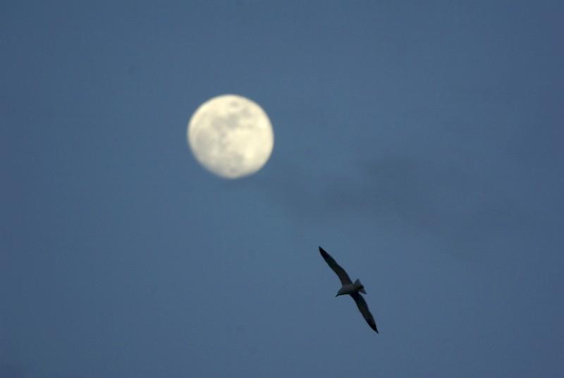 Lune et goéland