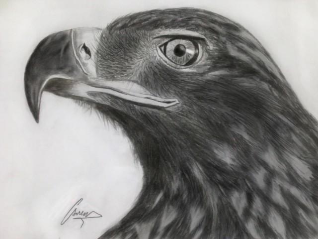 Dessin aigle royal - Dessin de aigle ...