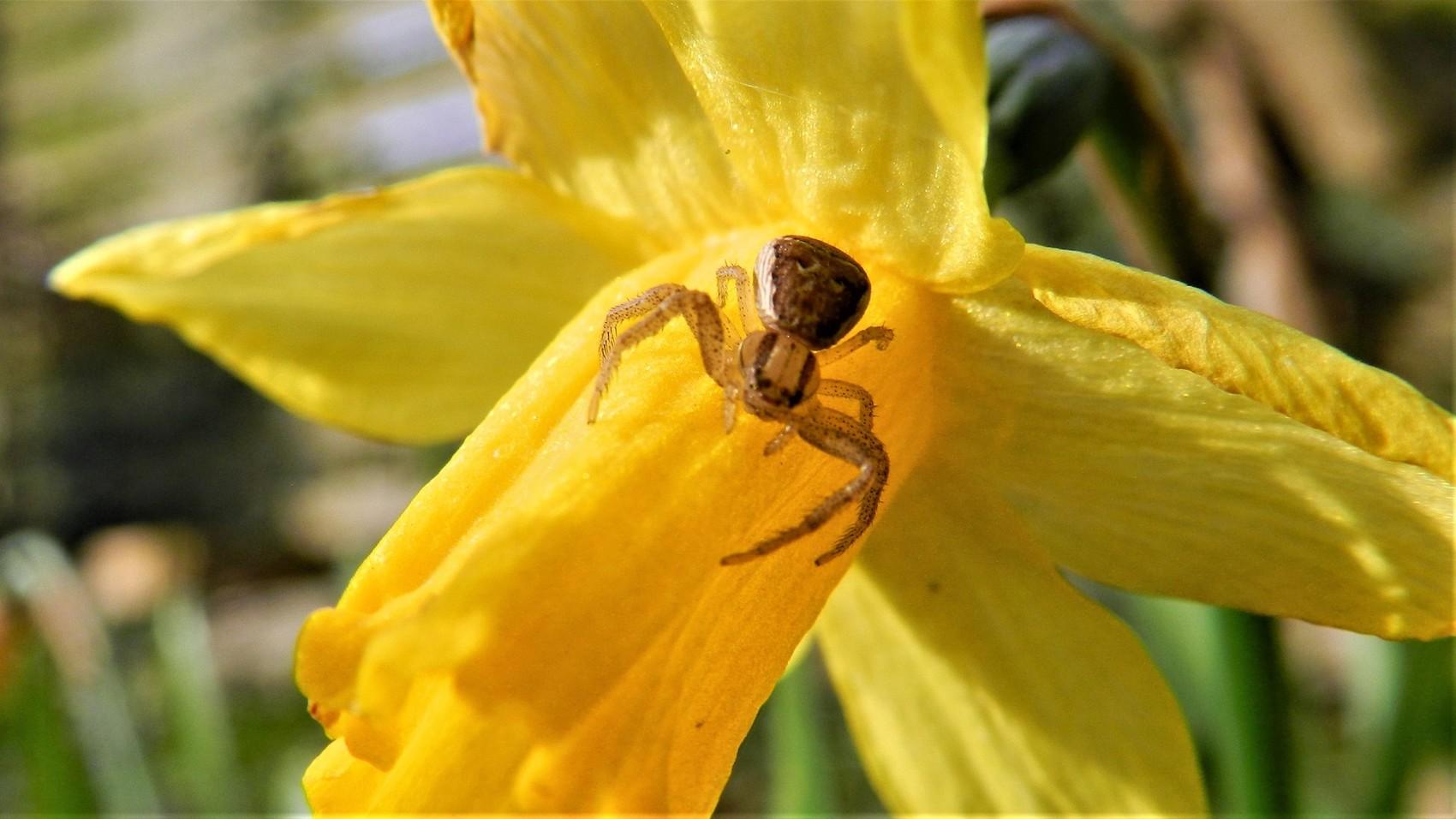 Petite araignée du jardin..