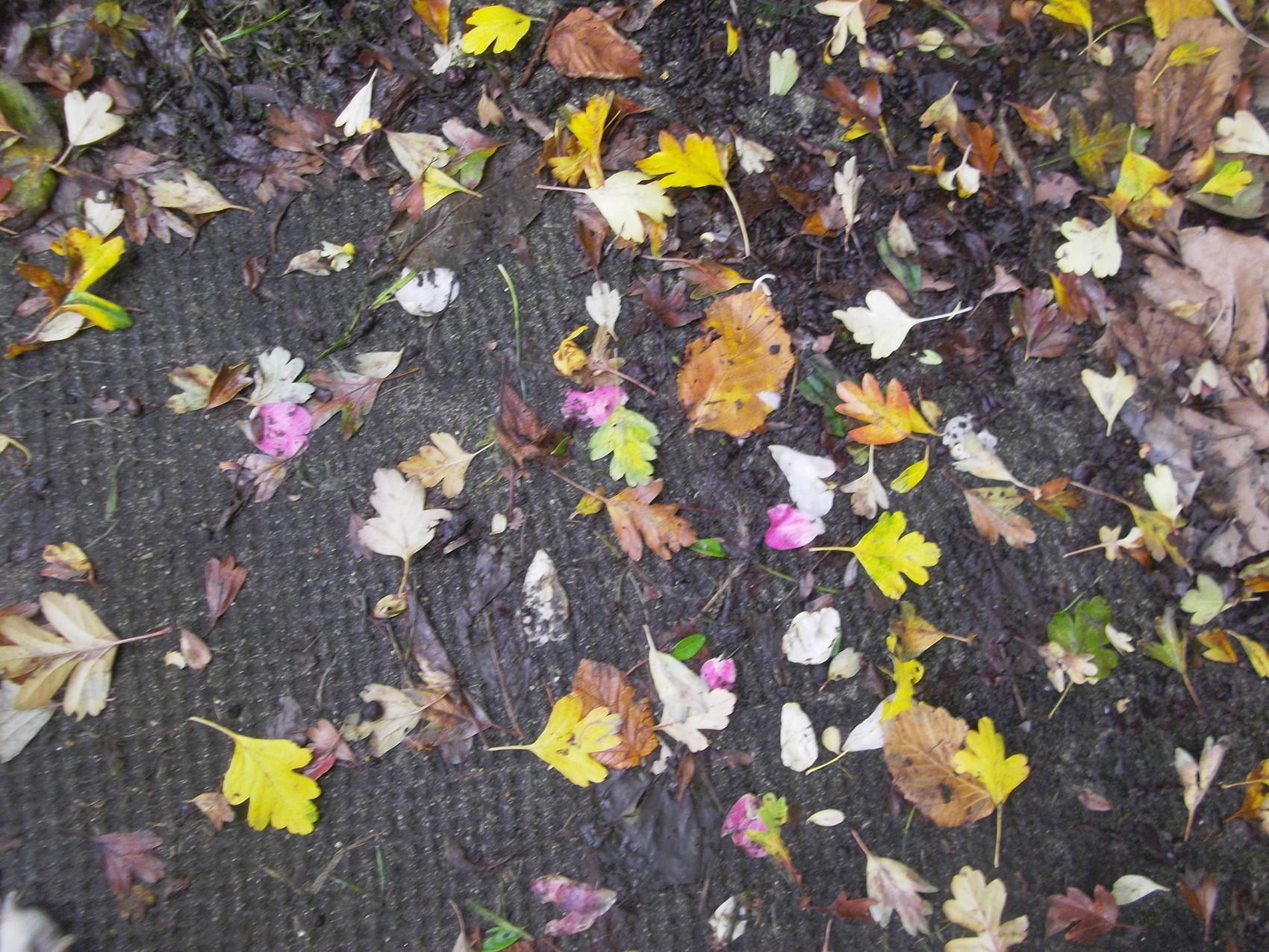 magie de  l automne