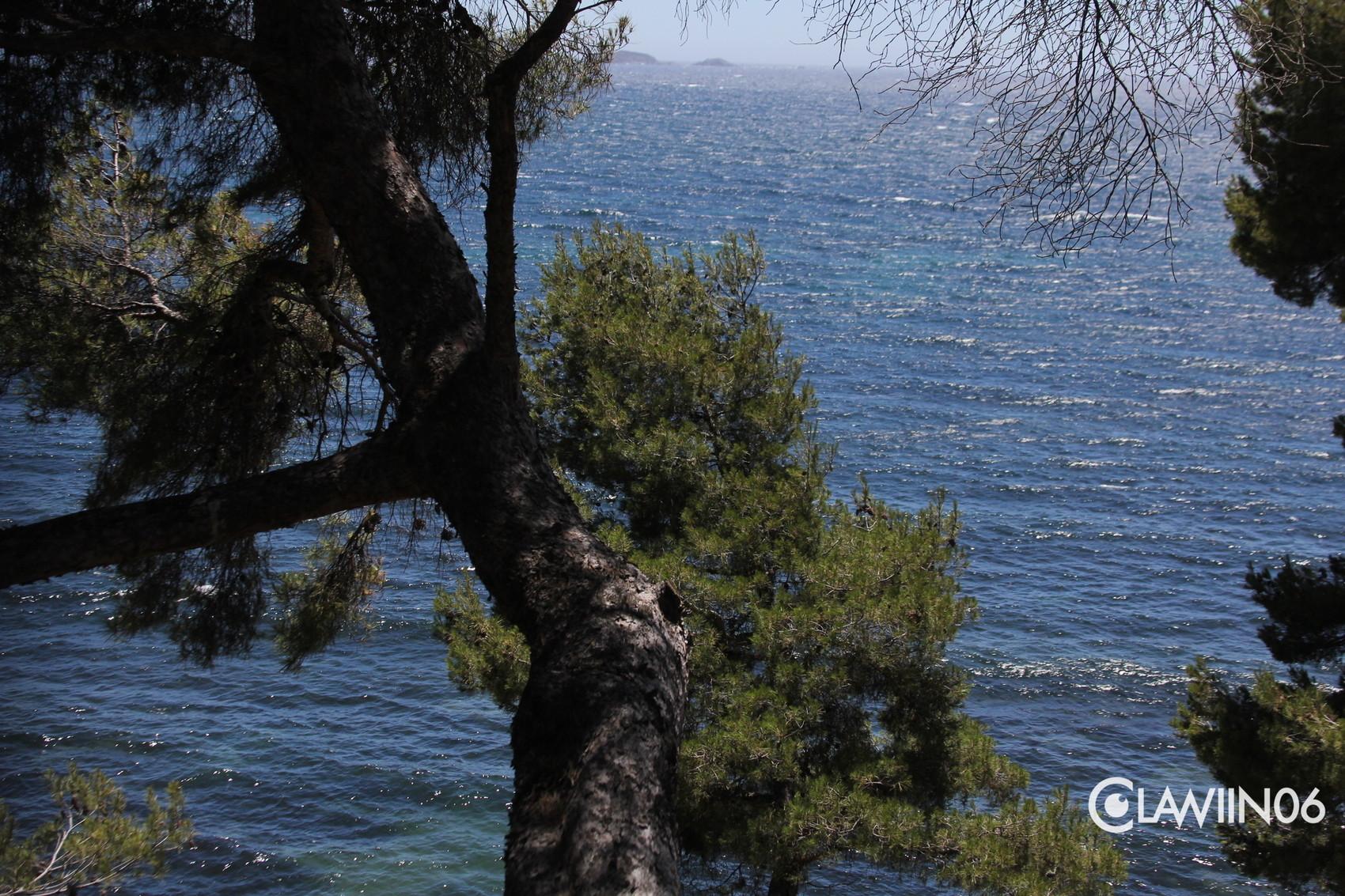 Photo bord de mer - Arbuste bord de mer ...