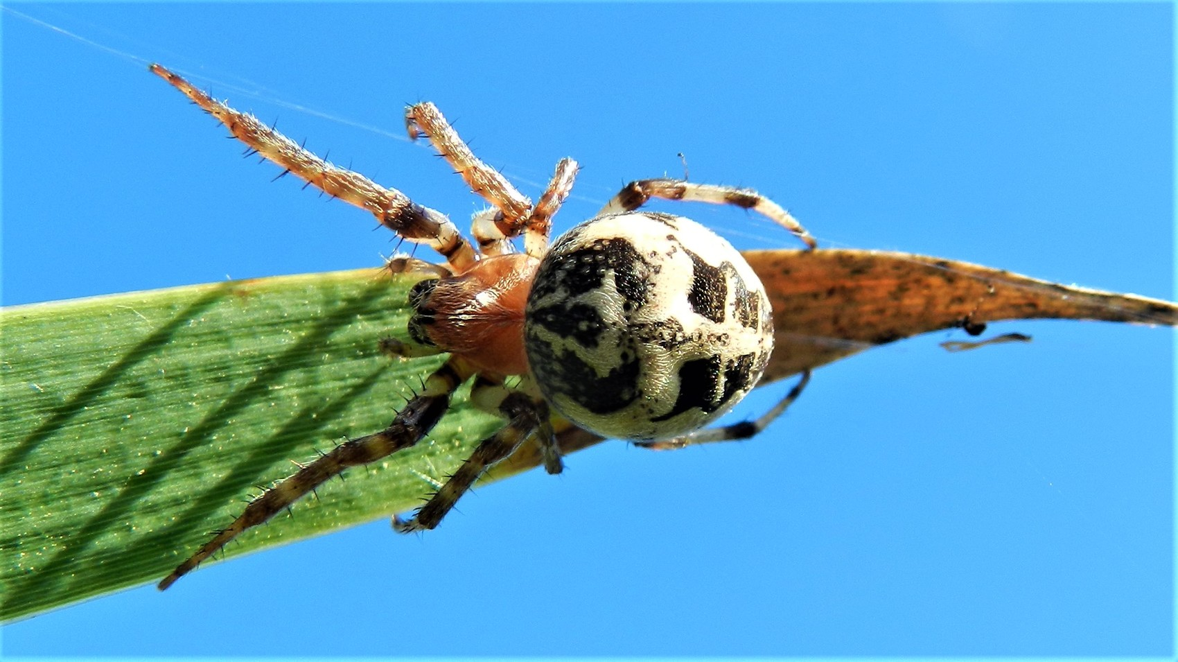 Araignée 4
