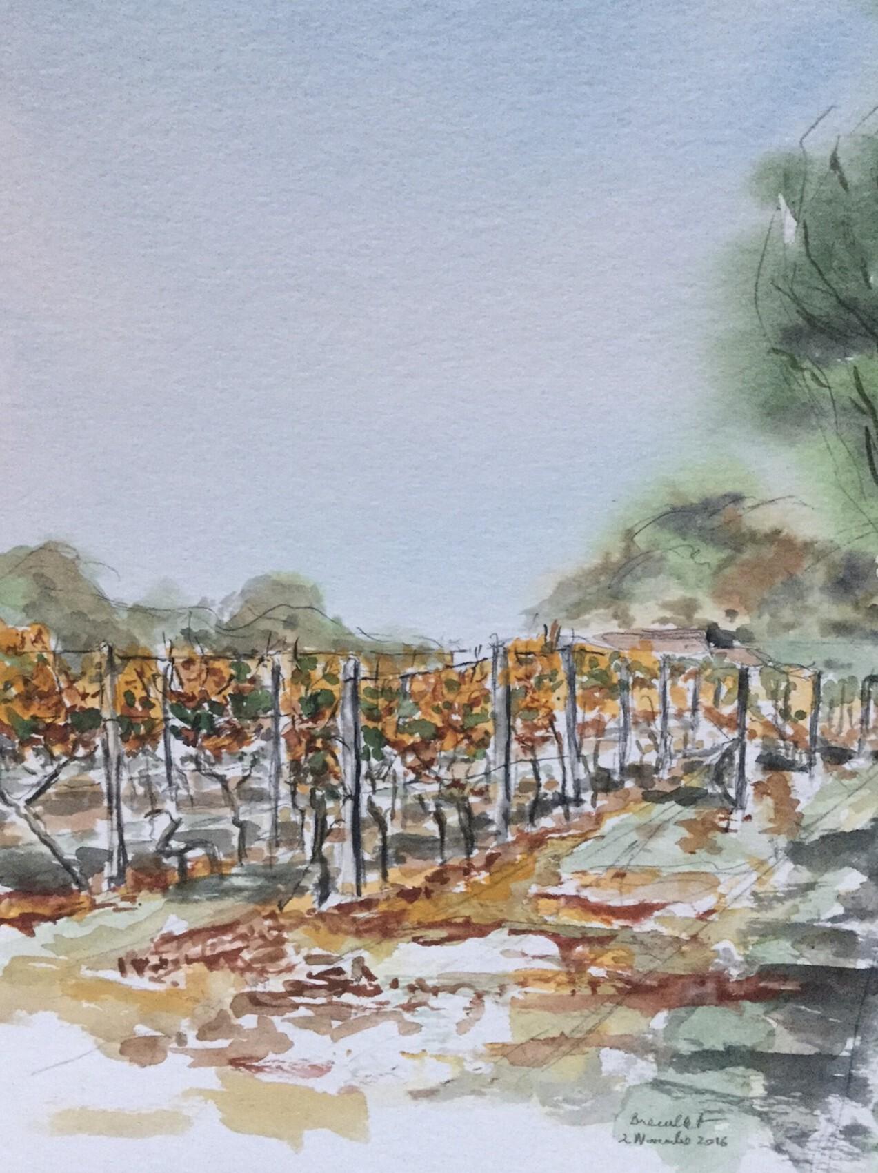 vignes à Breuillet