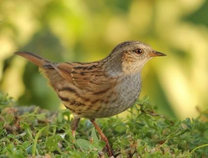 Photo oiseau ascenteur mouchet for Photo oiseau