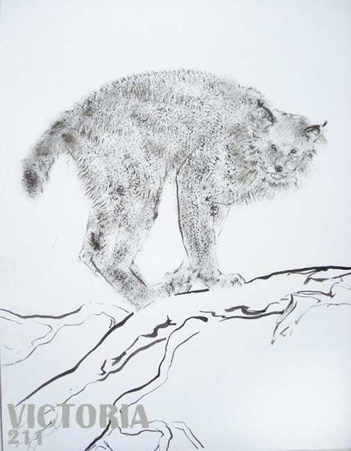 Le lynx 2