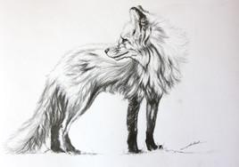 Dessin de renard 2