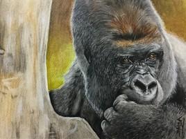 Gorille 2