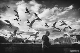 L'inconnu du pont qui donnait à manger aux oiseaux.