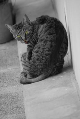 chat alors!!