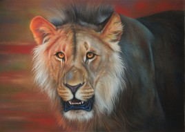 Mackenzie, le lion dans la savane