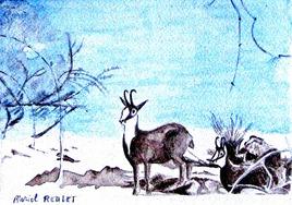 Aquarelle Les chamois en hiver / Watercolor Chamois in winter