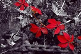 noir,blanc,rouge