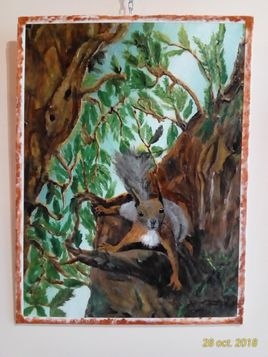 regard d'ecureuil