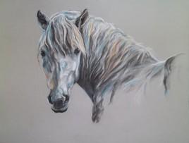 Portrait d'un cheval camargue II
