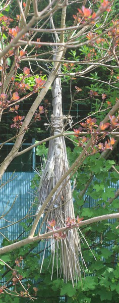 Mon nid d'oiseaux