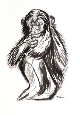 Le petit chimpanzé