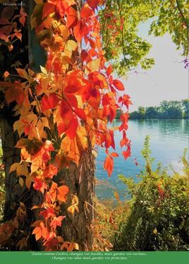 l'arbre d'automne..