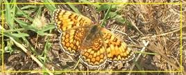 Papillon...!