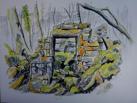 Ruine,  mousses et lichens