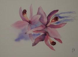 orchidée laelia perrini