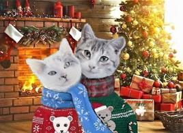 Mioumiou et Grisou vous souhaitent un joyeux Noël 2019 :)