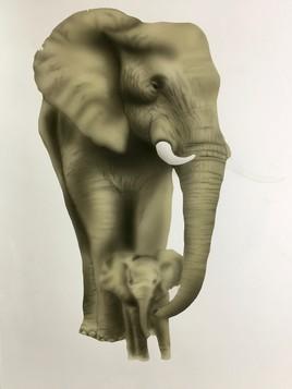 Elephant N&B