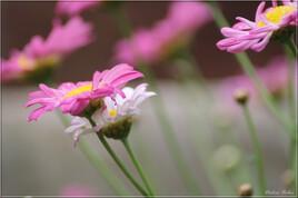 Floral inspiration - IMG 0870-2