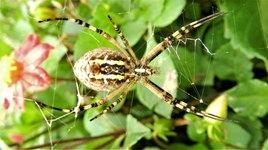 Araignée 7