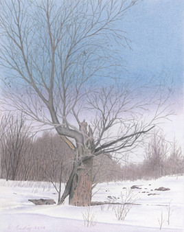 Le vieil arbre brisé
