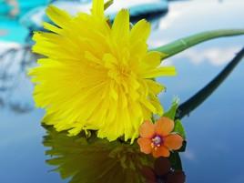 Reflets de fleurs 2