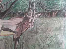 L'oryx dans les bois
