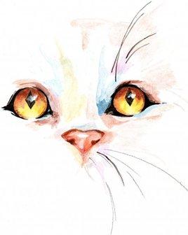 regard felin
