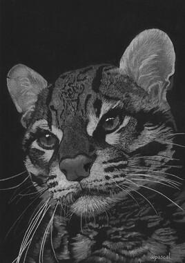 Margay ou chat-tigre