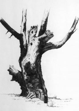 L'arbre mort. (60x50)