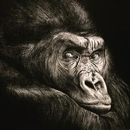 Le singe