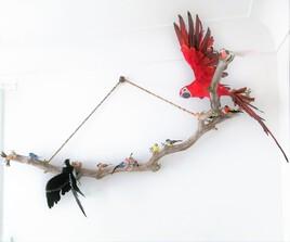 Branche d'oiseaux