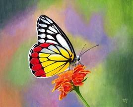Peinture acrylique: papillon Delias hyparete