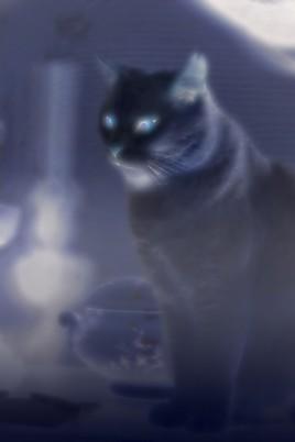 Le chat bleu...